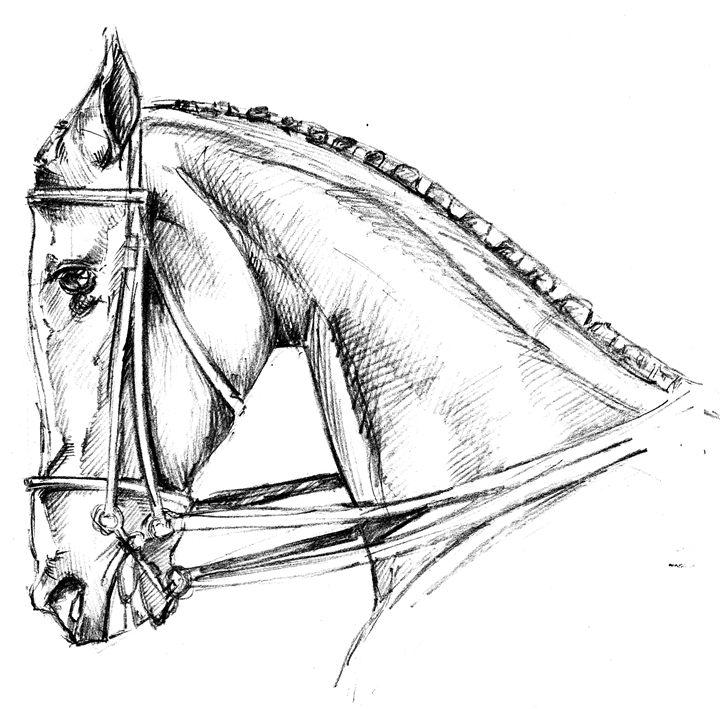 Horse Black and White - Chewie Donenea