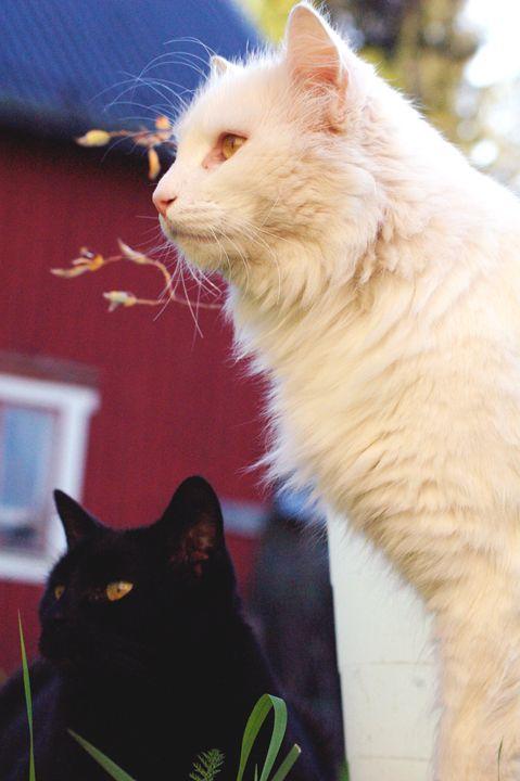 Cat's - Thiriht