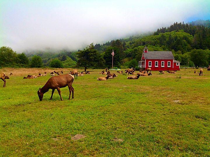 Nor Cal Elk - Ann Smith