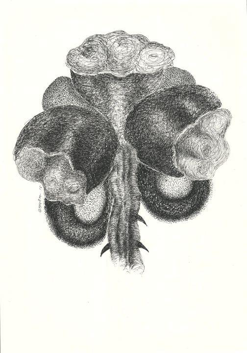 Northeastern flowers - FDN 16 - Nacif Ganem