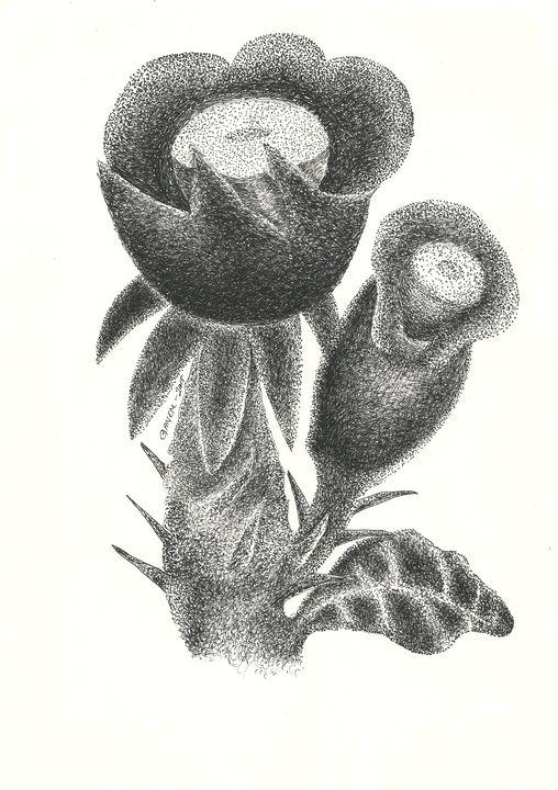 Northeastern flowers - 18 - Nacif Ganem