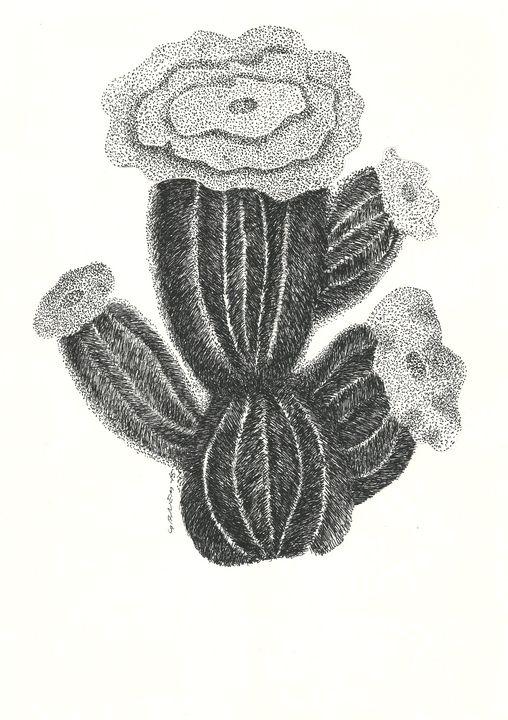 Northeastern flowers - FDN 19 - Nacif Ganem