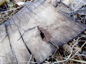 Wood wreck