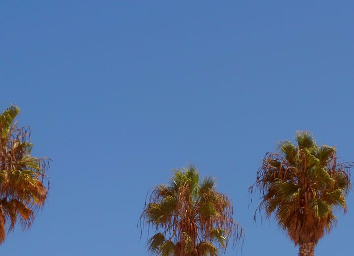 Palm Trees of California - Toki Hernández