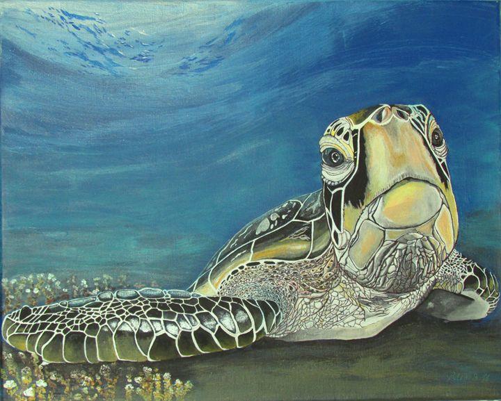 Ocean Turtle - ECCO Costa Rica