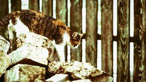 Careful cat
