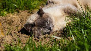 Cat almost sleeping under the Sun