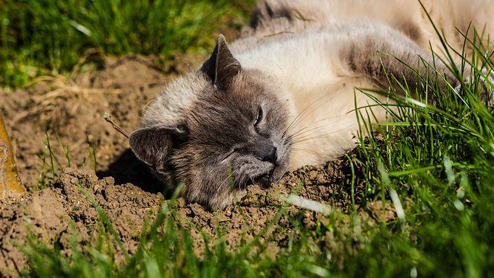 Cat almost sleeping under the Sun - Vlad Negru