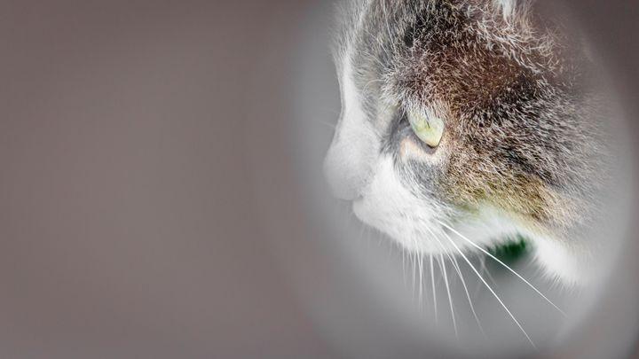 Cat on the prowl - Vlad Negru