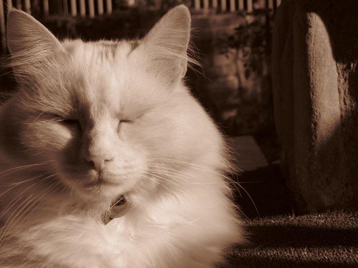 Cat portrait - Vlad Negru