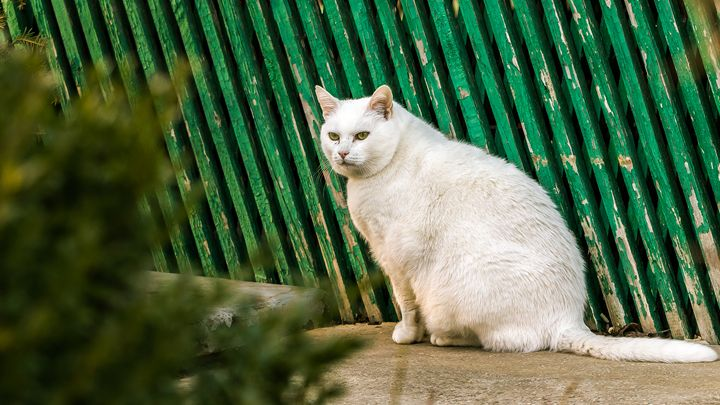 Cat - Vlad Negru