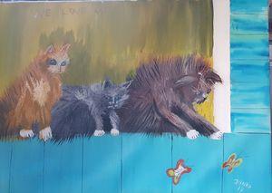 3 kitten