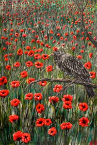 Baby Raven in the Field of Poppies