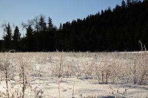 Snowy Bush Field