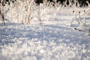 Crystal Snow Flakes