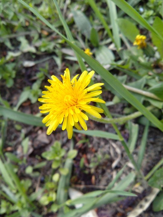sun on the ground - ElfElfen