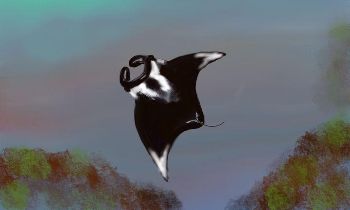 Manta birostris ( Giant Manta Ray ) - David R. Bedingfield