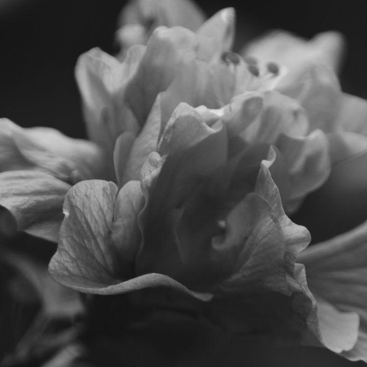 Pedal blossom for you - Catt McGonigle
