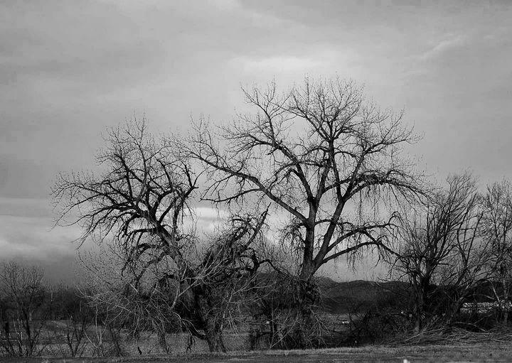 Tree Fight - Catt McGonigle