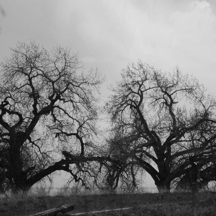 Touching trees - Catt McGonigle