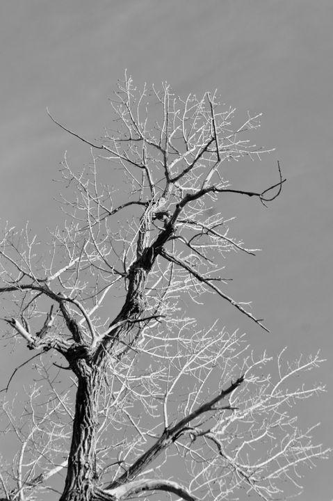 Sky tree - Catt McGonigle