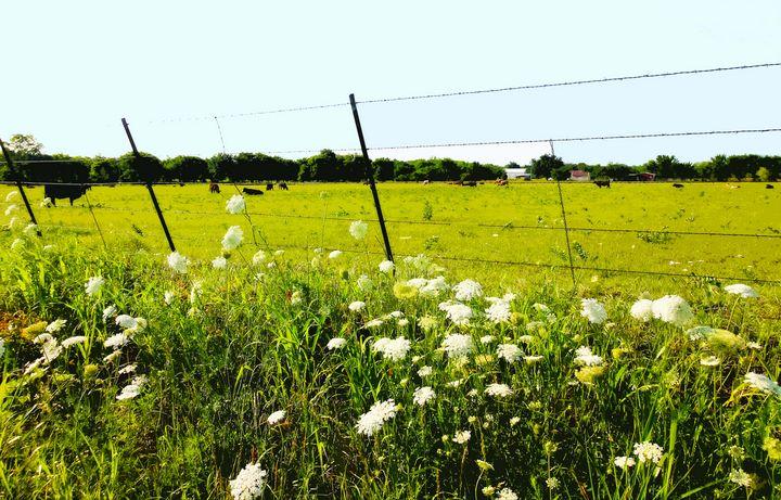 Farming - Leslie Johnson