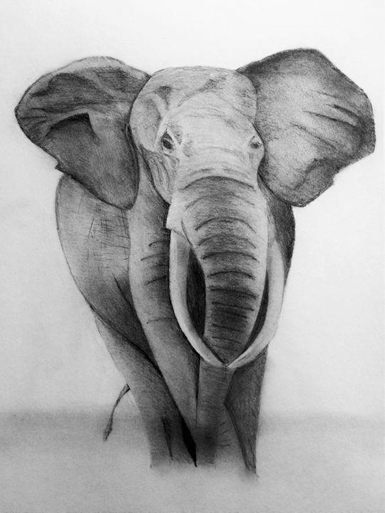 Elephant Stroll - A. Tohinaka