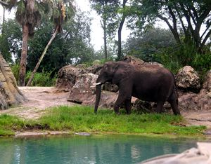 The Wandering Elephant