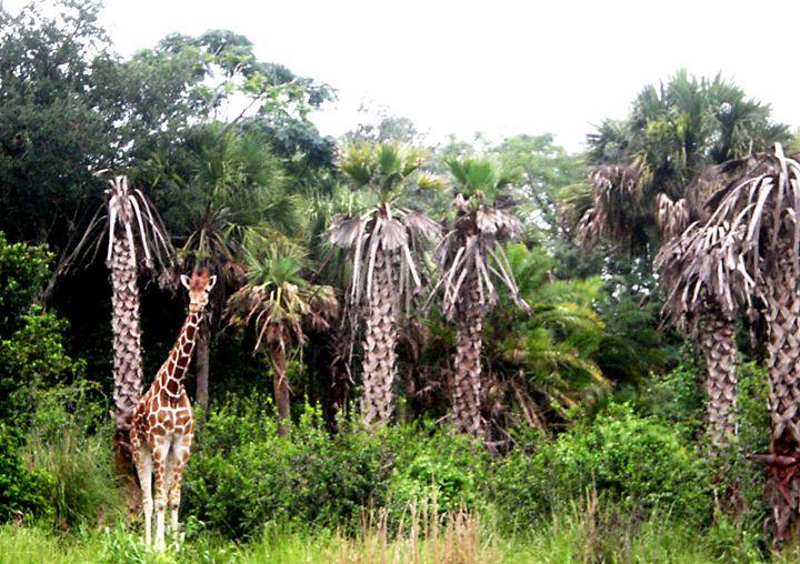 The Hidden Giraffe Shereen S Gallery Photography Animals Birds