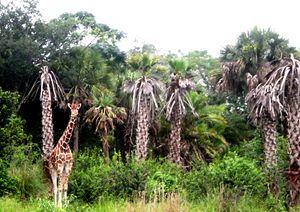 The Hidden Giraffe