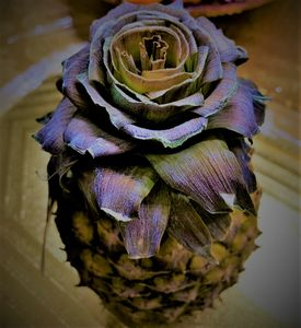 Pineapple Rose - Zana's Gallery