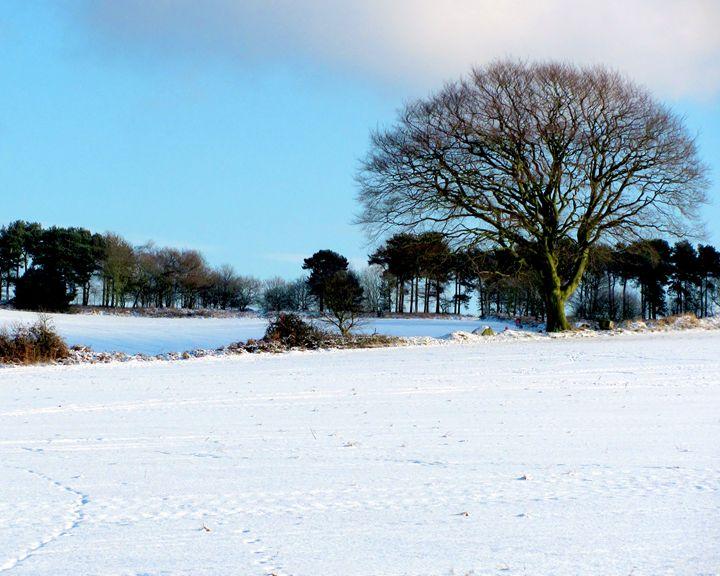 Snowscape - Mistynet Photography