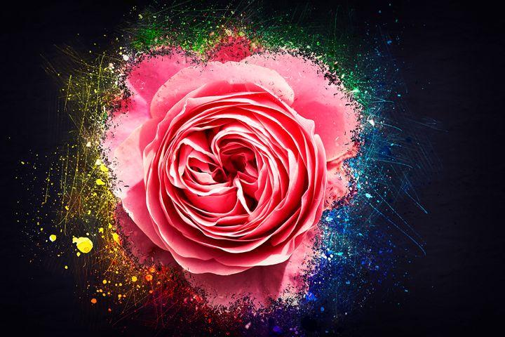 Rose soft pastel Pink - pbombaert