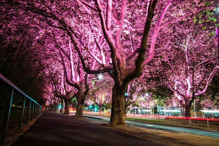 Melbourne night life - Ravenous Photography