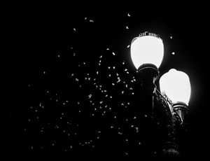 Bugs and lamps