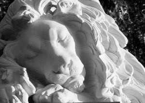 Sleeping Lion - Melt