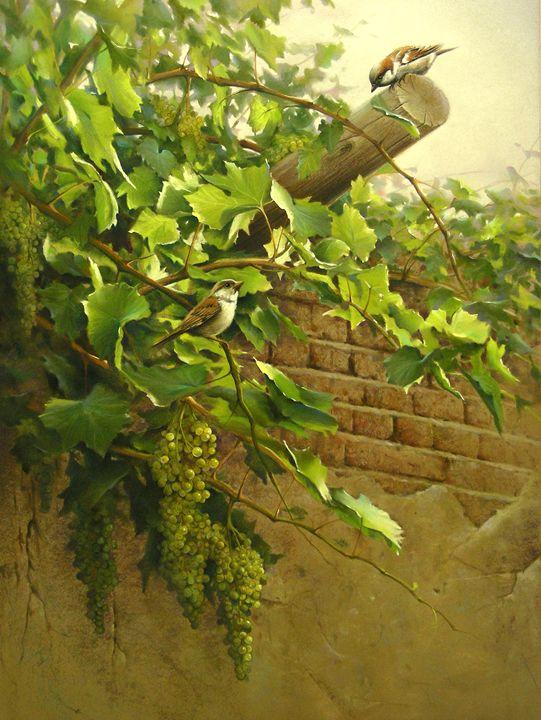 Sparrows on grapevine - Rozller