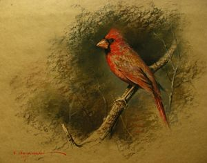 Redbreast Bird