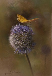 Yellow butterly and Silybum marianum