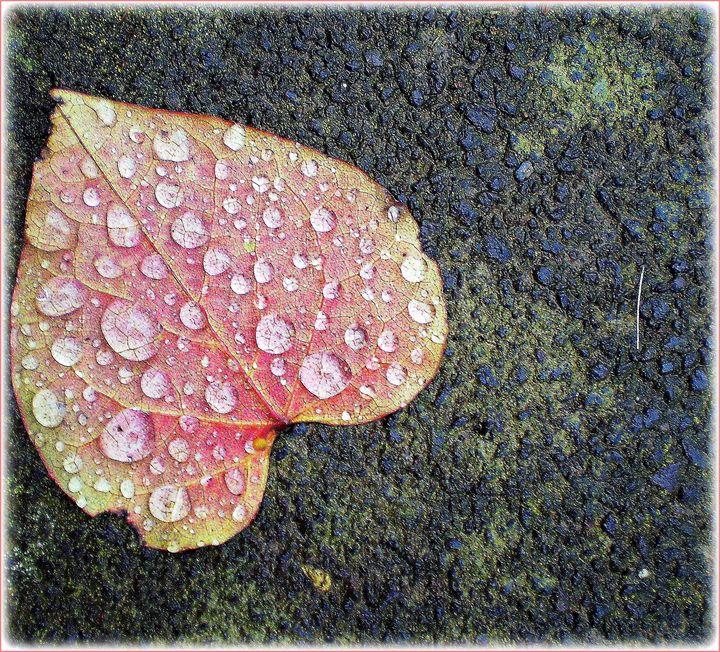 raindrops on a fallen leaf - Gallery Florette