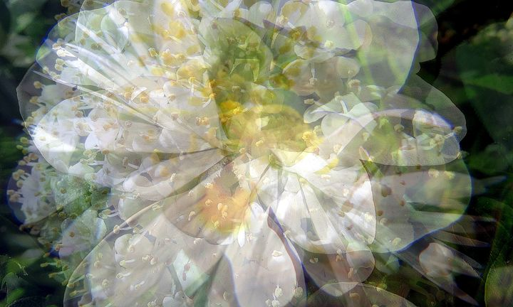 layers of white flowers - Gallery Florette