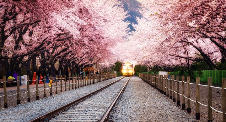 spring blossom station - Aaron Choi Photography