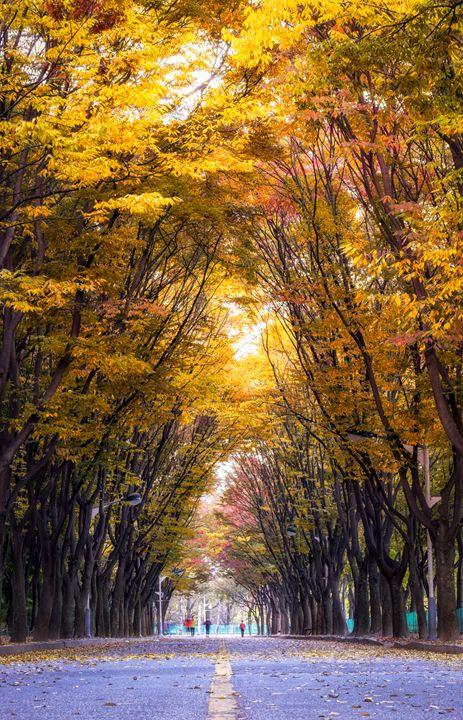 Autumn Stroll - Aaron Choi Photography