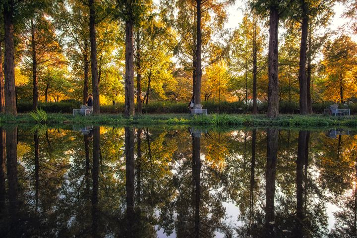 Seoul forest autumn reflections - Aaron Choi Photography