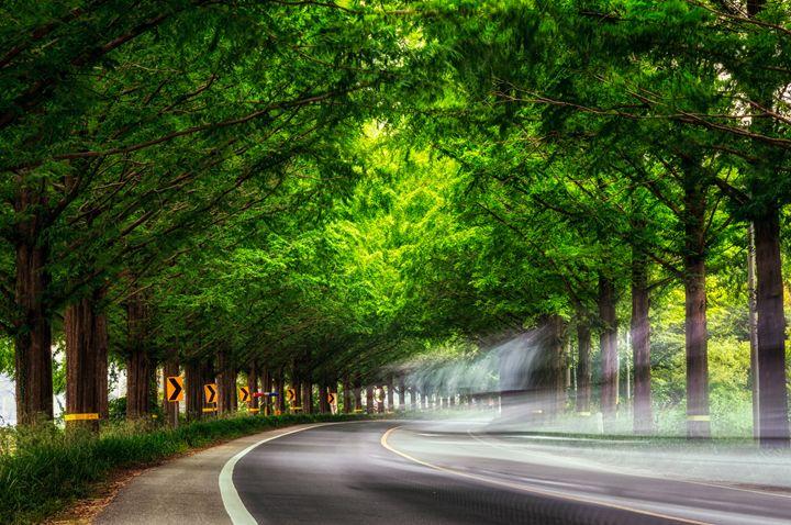 Driving through Meta Sequoia Road - Aaron Choi Photography