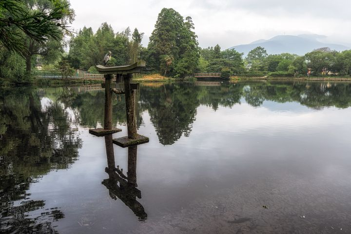grey heron on lake kinrin - Aaron Choi Photography