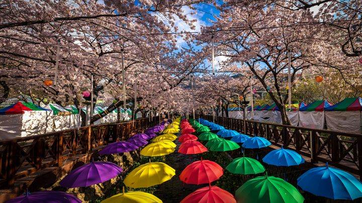 Color of Spring - Aaron Choi Photography