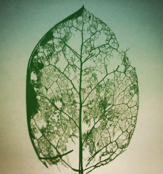 Fragility - BEBingham Art
