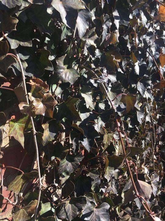Greenery at Dusk - Juliette Sebock