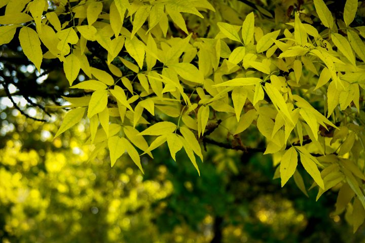 Leaves - Manivannan Venkatasubbu
